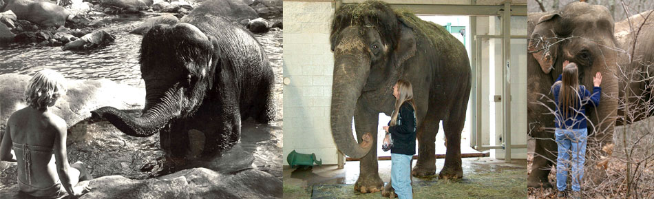 Carol Buckley - Elephant Welfare Consultant